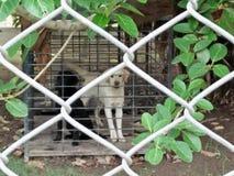 Bör hundkapplöpningen cageds? royaltyfri fotografi