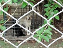 Bör hundkapplöpningen cageds? fotografering för bildbyråer