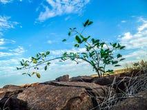 Bördig liten växt ett ställe som bebos lite av växter Arkivbild