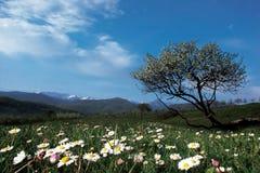 börja springtime Arkivfoton