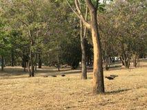 Början av hösten i en parkera Arkivfoton
