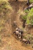 Början av korsningen africa kenya mara masaiflod Arkivbilder
