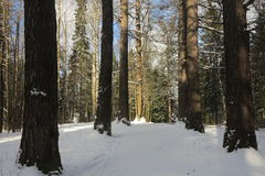 Början av våren i skogen arkivbild