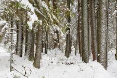 börjande vinter Arkivfoton