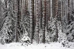 börjande vinter Arkivfoto