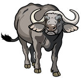 Búfalo africano do cabo Imagens de Stock