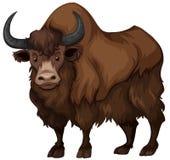 Búfalo com pele marrom ilustração royalty free