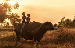 Búfalo de água feliz da equitação do menino Fotos de Stock