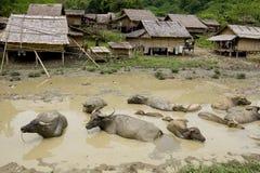Búfalo de água na frente da vila de Hmong, Laos fotos de stock royalty free