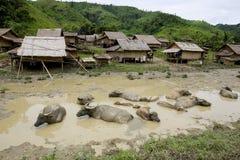 Búfalo de água na frente da vila de Hmong, Laos Imagens de Stock