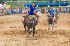 Búfalo de agua que compite con en Pattaya, Tailandia Foto de archivo libre de regalías