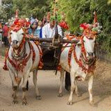 Búfalo decorado e povos locais na rua na cerimônia da doação, Bagan, Myanmar, Burma Foto de Stock Royalty Free