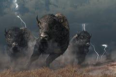 Búfalo em uma tempestade ilustração royalty free