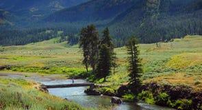 Búfalo en el valle de Lamar Foto de archivo libre de regalías