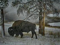 Búfalo en la nieve Fotos de archivo libres de regalías
