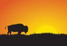 Búfalo en la puesta del sol Imagen de archivo