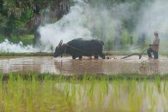 Búfalo que controla del granjero para arar la granja del arroz Foto de archivo libre de regalías