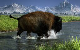 Búfalo que cruza um rio ilustração stock