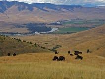 Búfalo, vale e rio Fotografia de Stock Royalty Free