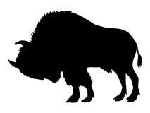 Búfalo, vista lateral ilustração do vetor