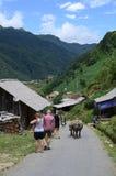 Búfalos en el pueblo de Cat Cat en Sapa Fotos de archivo libres de regalías