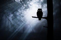 Búho en rama de árbol en bosque mágico en la noche libre illustration