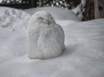 Búho nevoso lindo encaramado en la nieve Foto de archivo
