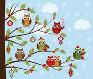 Búhos de la Navidad Foto de archivo libre de regalías