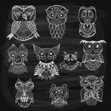 10 búhos dibujados tiza en la pizarra Foto de archivo libre de regalías