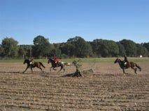 Búsqueda con los caballos Imagen de archivo libre de regalías