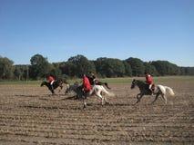 Búsqueda con los caballos Foto de archivo