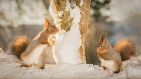 Búsqueda de la nieve Fotografía de archivo