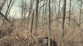 Búsqueda de los árboles del barril de maderas de Michigan Imagen de archivo