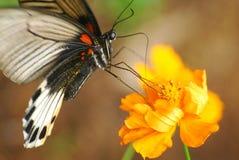 Búsqueda del polen Imagenes de archivo