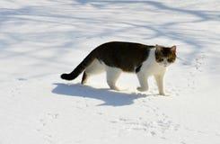 Búsqueda en la nieve imagen de archivo libre de regalías