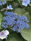 Búsqueda para el néctar Fotografía de archivo