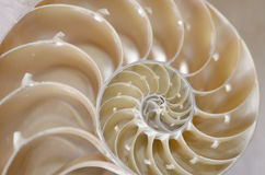 Búzio do caracol de mar Imagens de Stock Royalty Free