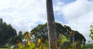 Bûcheron réduisant un arbre 4k clips vidéos