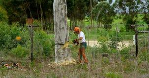 Bûcherons réduisant l'arbre dans la forêt 4k banque de vidéos