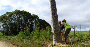 Bûcherons réduisant l'arbre dans la forêt 4k clips vidéos