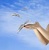 Bücher, die von den Händen fliegen Stockbilder