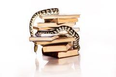 Bücher und eine Schlange auf einem weißen Hintergrund Lizenzfreie Stockfotografie