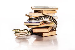 Bücher und eine Schlange auf einem weißen Hintergrund Stockfoto