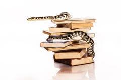 Bücher und eine Schlange auf einem weißen Hintergrund Stockfotos