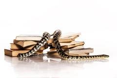 Bücher und eine Schlange auf einem weißen Hintergrund Lizenzfreie Stockbilder