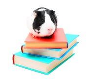 Bücher und Meerschweinchen. Stockbilder