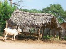 Büffel in Asien Lizenzfreie Stockfotos