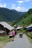 Büffel an Cat Cat-Dorf in Sapa Lizenzfreie Stockfotos