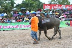 Büffel, der im Büffel laufendes Festiva läuft Stockfotografie