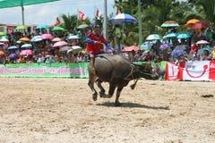 Büffel, der im Büffel laufendes Festiva läuft Lizenzfreie Stockfotografie